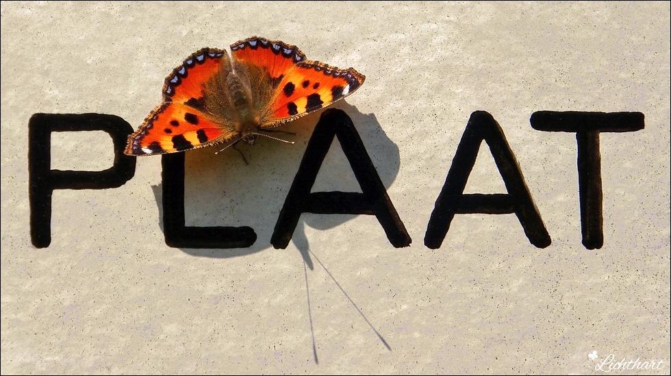 Vlinder-Plaat…
