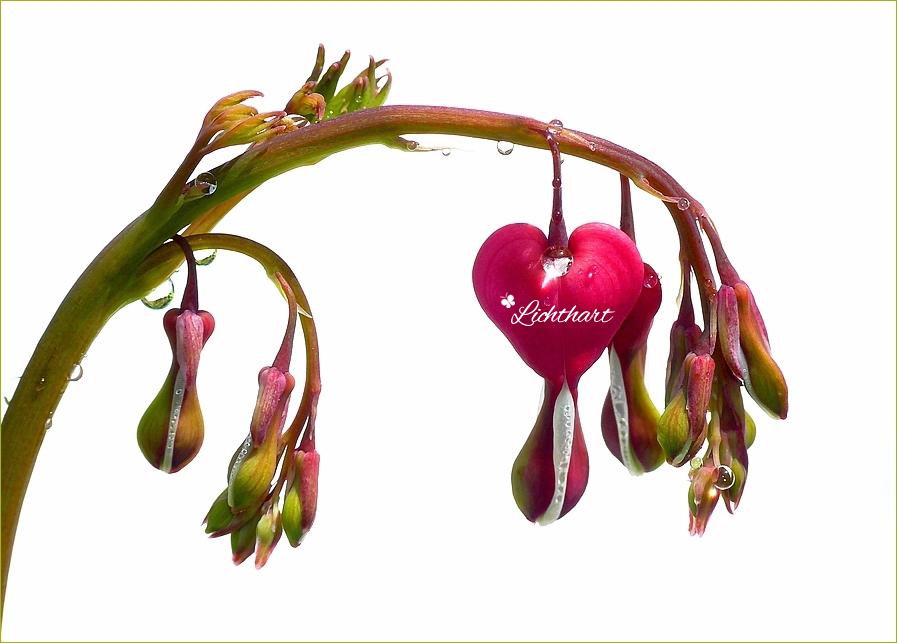 Liefdes-Verdriet